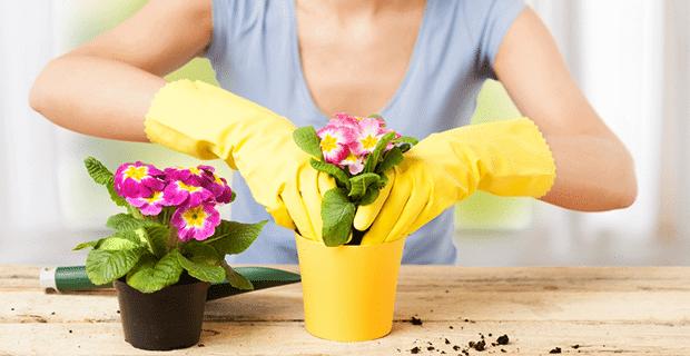 Çiçek Bakımı İle Çiçeklerinize Güzellik Katın