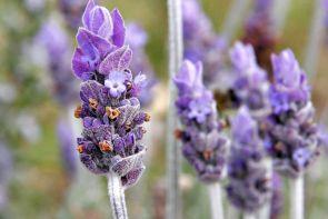 Vücut Direncinizi Artıran Şifalı Bitki: Karabaş Ot