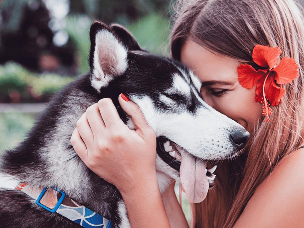Evcil Hayvan Hediye Almak Biraz Daha Düşünün