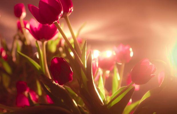 Çiçeklerin Anlamları ve Bilinmeyen Hikayeleri