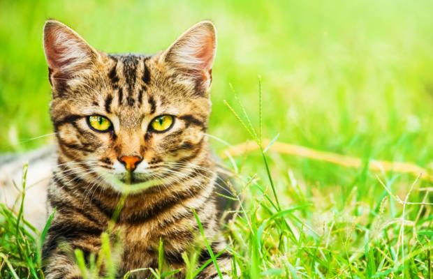 Rüyada Kedi Görmek Ne Anlama Gelir?