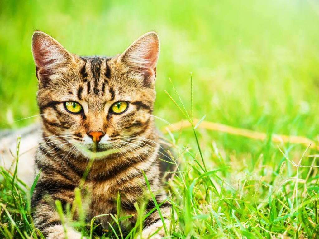 Kedi Beslemenin Altın Kuralları