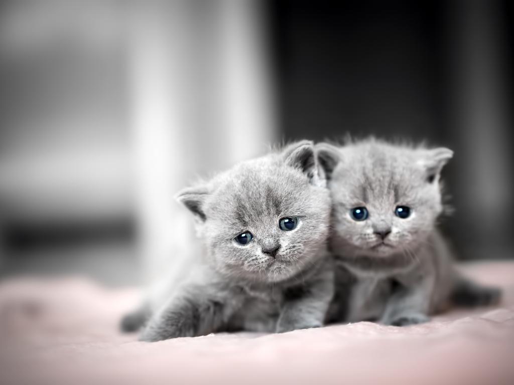 Kedileri Daha İyi Anlamanın 4 Yolu