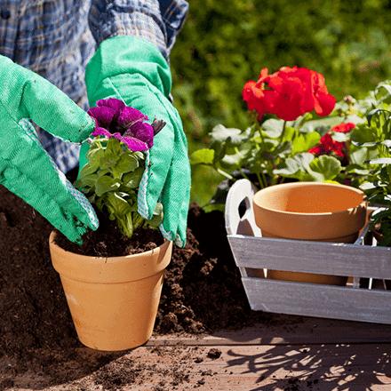 Evde Çiçek Bakımı Nasıl Yapılmalı