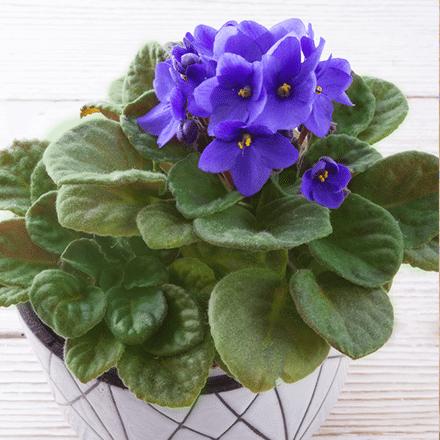 Kış Mevsiminde Çiçek Bahçesi Yaratmak