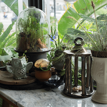 Minik Bahçem; Teraryum