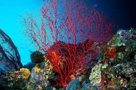 Denizin En Güzel Armağanlarından Mercan 25