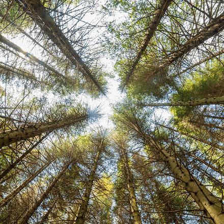 Dünya Ormancılık Günü