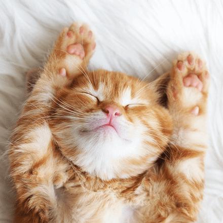 Kedi Bakmanın Püf Noktaları