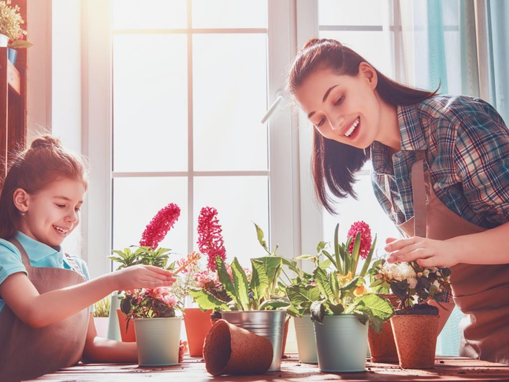 Bitki Yetiştirmek İçin Bilmeniz Gerekenler